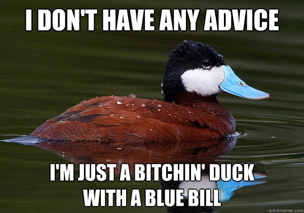 I don't have any advice I'm just a bitchin' duck  with a blue bill - I don't have any advice I'm just a bitchin' duck  with a blue bill  Bitchin Ruddy Duck