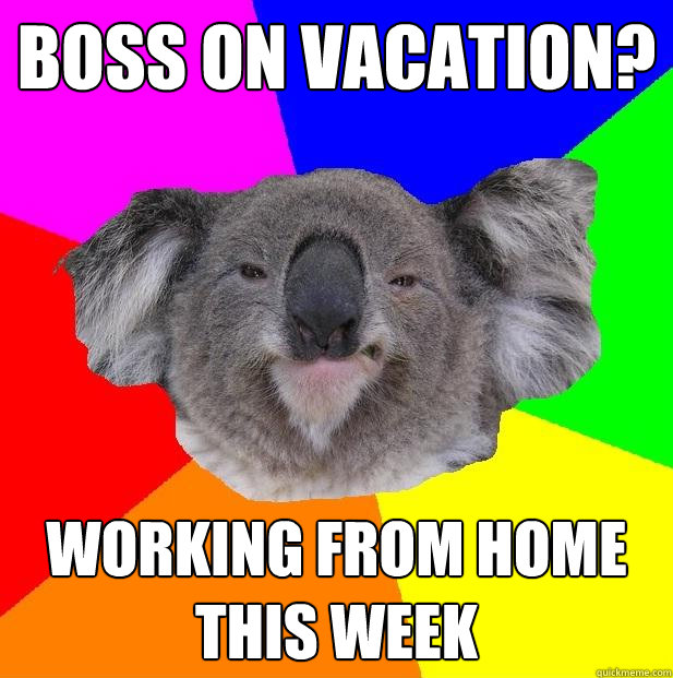 Boss on Vacation? working from home this week  Incompetent coworker koala
