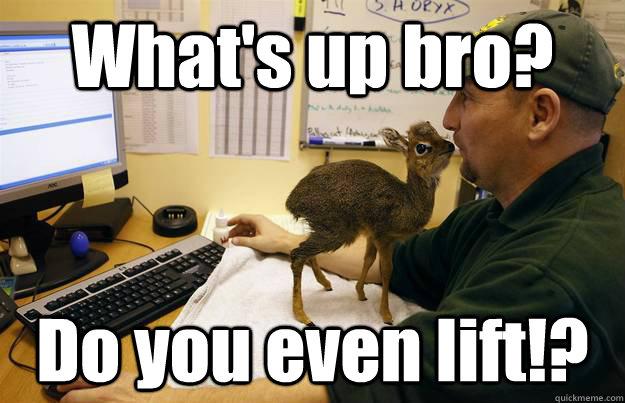 What's up bro? Do you even lift!?  dik dik