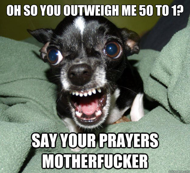 Oh so you outweigh me 50 to 1? say your prayers motherfucker  Chihuahua Logic