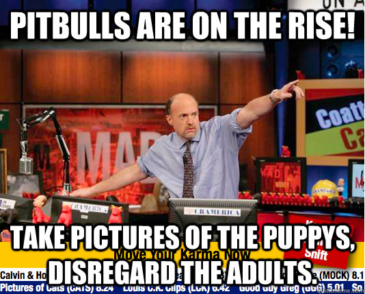Pitbulls are on the rise! Take pictures of the puppys, disregard the adults. - Pitbulls are on the rise! Take pictures of the puppys, disregard the adults.  move your karma now