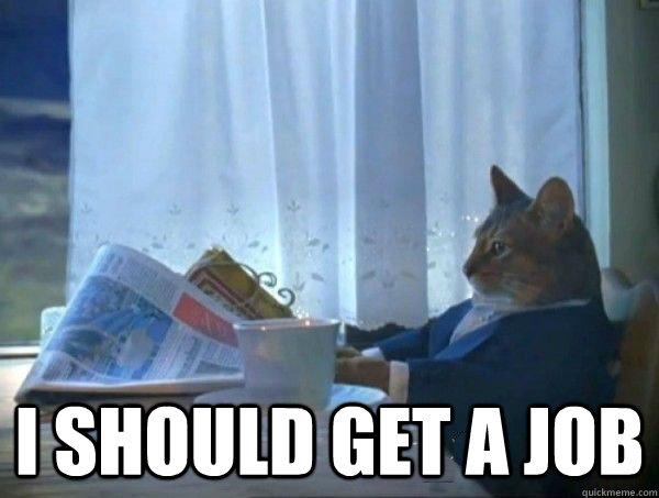 I should get a job -  I should get a job  morning realization newspaper cat meme