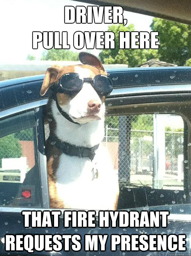 Driver,  pull over here That fire hydrant requests my presence