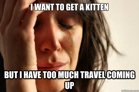 I want to get a kitten But I have too much travel coming up - I want to get a kitten But I have too much travel coming up  First World Problems