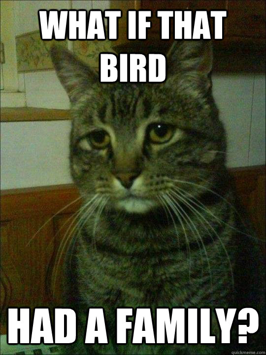 What if that bird had a family? - What if that bird had a family?  Depressed cat