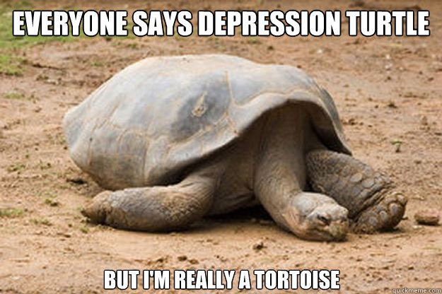 Everyone says depression turtle but I'm really a tortoise - Everyone says depression turtle but I'm really a tortoise  Depression Turtle