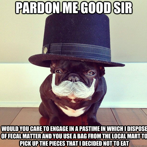 pardon me good sir would you care to engage in a pastime in which i dispose of fecal matter and you use a bag from the local mart to pick up the pieces that i decided not to eat - pardon me good sir would you care to engage in a pastime in which i dispose of fecal matter and you use a bag from the local mart to pick up the pieces that i decided not to eat  High Class Hound
