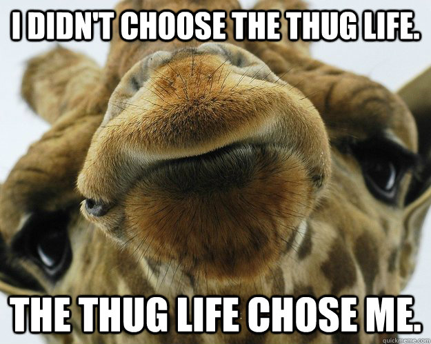 Funny Kissy Face Meme : Thug life giraffe memes quickmeme
