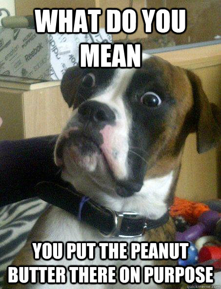 what do you mean you put the peanut butter there on purpose - what do you mean you put the peanut butter there on purpose  Baffled boxer