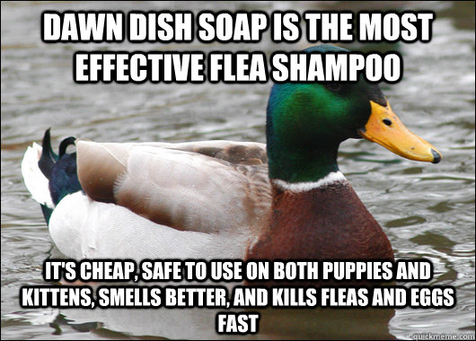 Dawn dish soap is the most effective flea shampoo It's cheap, safe to use on both puppies and kittens, smells better, and kills fleas and eggs fast - Dawn dish soap is the most effective flea shampoo It's cheap, safe to use on both puppies and kittens, smells better, and kills fleas and eggs fast  Actual Advice Mallard