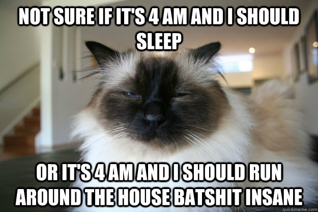 not sure if it's 4 AM and i should sleep or it's 4 am and i should run around the house batshit insane - not sure if it's 4 AM and i should sleep or it's 4 am and i should run around the house batshit insane  unsure cat