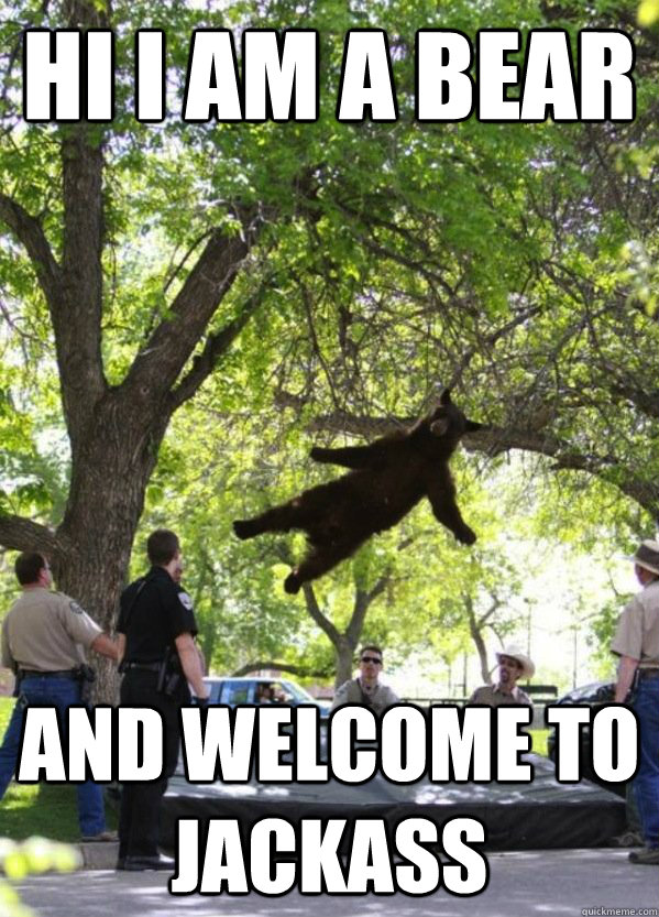 hi i am a bear  and welcome to jackass