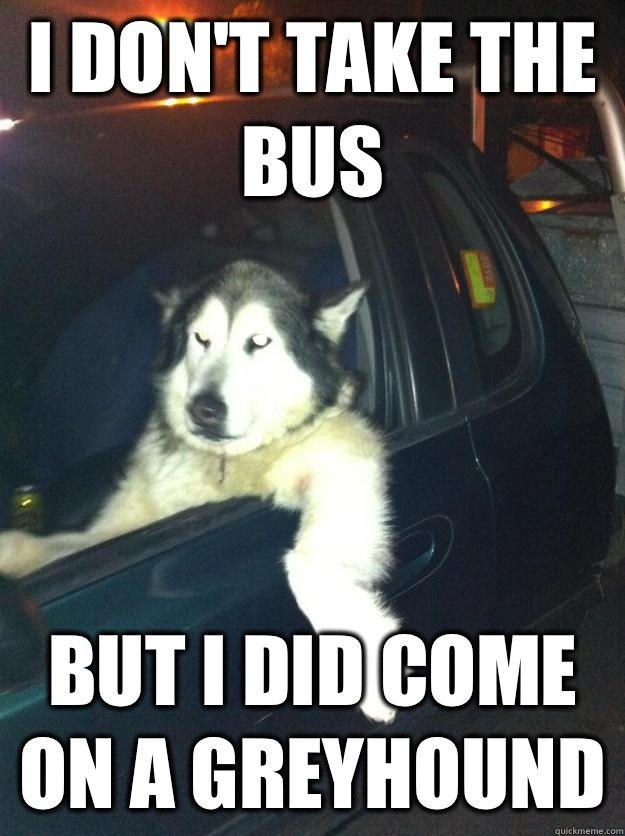 I don't take the bus But I did come on a greyhound  Mean Dog