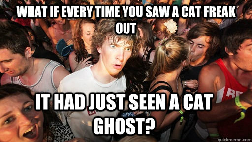 What if every time you saw a cat freak out it had just seen a cat ghost?  - What if every time you saw a cat freak out it had just seen a cat ghost?   Sudden Clarity Clarence