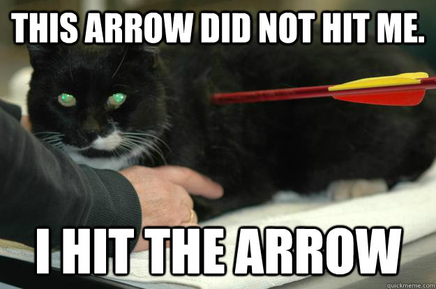 This arrow did not hit me. I HIT THE ARROW  Worlds Toughest Cat