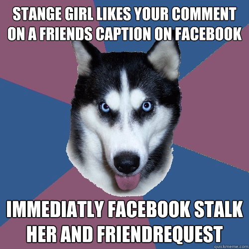 stange girl likes your comment on a friends caption on facebook immediatly facebook stalk her and friendrequest  Creeper Canine