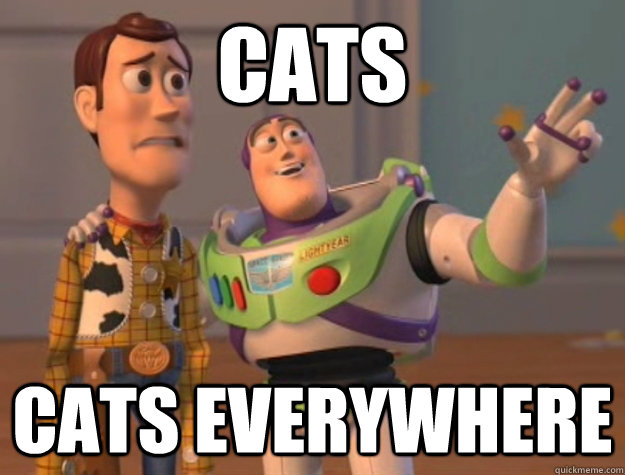 Cats cats everywhere - Cats cats everywhere  Buzz Lightyear