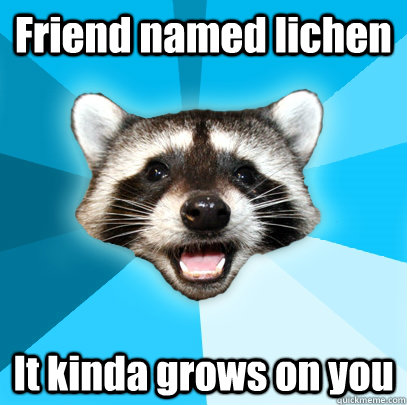 Friend named lichen It kinda grows on you - Friend named lichen It kinda grows on you  Lame Pun Coon