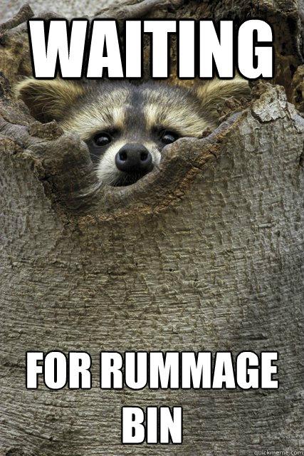 waiting for rummage bin  Stalker Raccoon