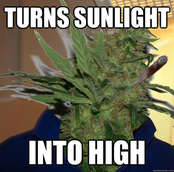 Turns sunlight into high - Turns sunlight into high  Misc