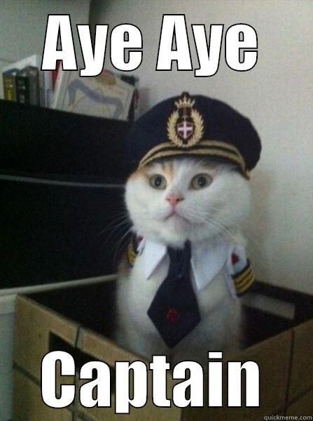 aye aye captain cat - AYE AYE CAPTAIN Captain kitteh