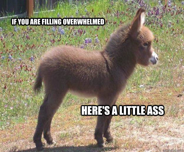 if you are filling overwhelmed  here's a little ass  in case you dont get any tonight