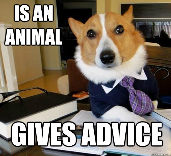is an animal Gives advice - is an animal Gives advice  Lawyer Dog
