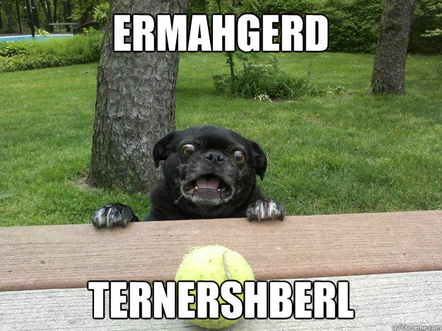 Ermahgerd Ternershberl  Berks Dog