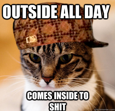 Outside all day Comes inside to shit - Outside all day Comes inside to shit  Scumbag Cat