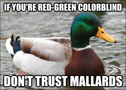 If you're red-green colorblind don't trust mallards - If you're red-green colorblind don't trust mallards  Actual Advice Mallard