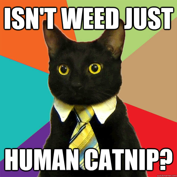 Isn't weed just human catnip? - Isn't weed just human catnip?  Business Cat