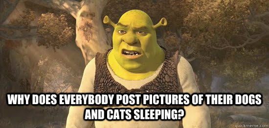 Why does everybody post pictures of their dogs and cats sleeping? -  Why does everybody post pictures of their dogs and cats sleeping?  Confused Shrek