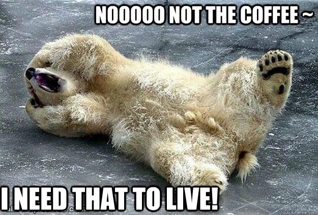 Nooooo: Distressed Bear Memes