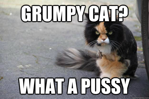 Grumpy Cat? What a pussy - Grumpy Cat? What a pussy  Angry Cat