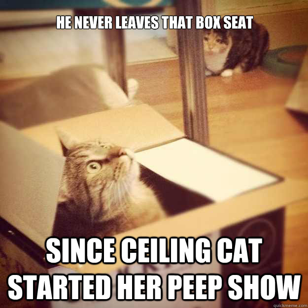 He never leaves that box seat since ceiling cat started her peep show