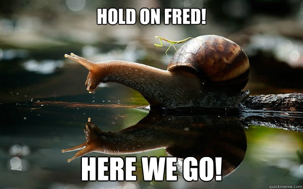 Hold on Fred! Here we go! - Hold on Fred! Here we go!  Snail mount
