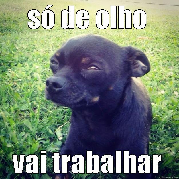 SÓ DE OLHO VAI TRABALHAR Skeptical Dog