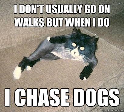 I don't usually go on walks but when i do i chase dogs