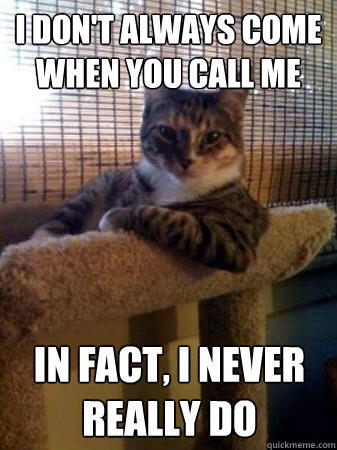 i don't always come when you call me in fact, i never really do  The Most Interesting Cat in the World