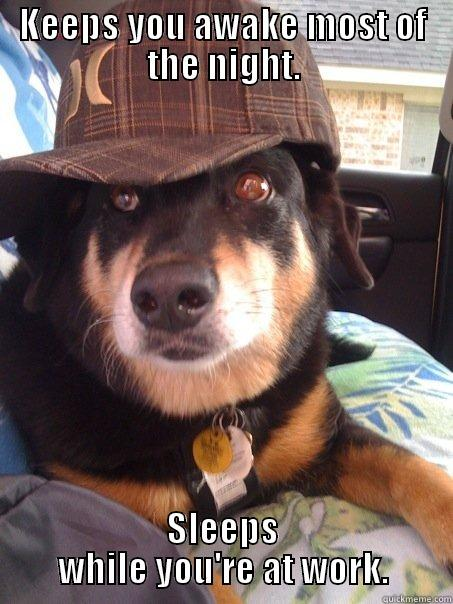 KEEPS YOU AWAKE MOST OF THE NIGHT. SLEEPS WHILE YOU'RE AT WORK. Scumbag dog