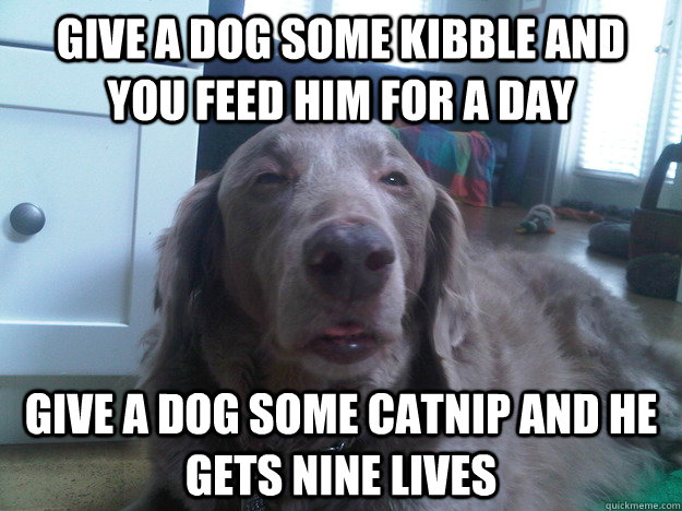 Give a dog some kibble and you feed him for a day Give a dog some catnip and he gets nine lives - Give a dog some kibble and you feed him for a day Give a dog some catnip and he gets nine lives  10 Dog