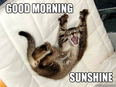 Funny Memes For Good Morning : Good morning funny meme lekton
