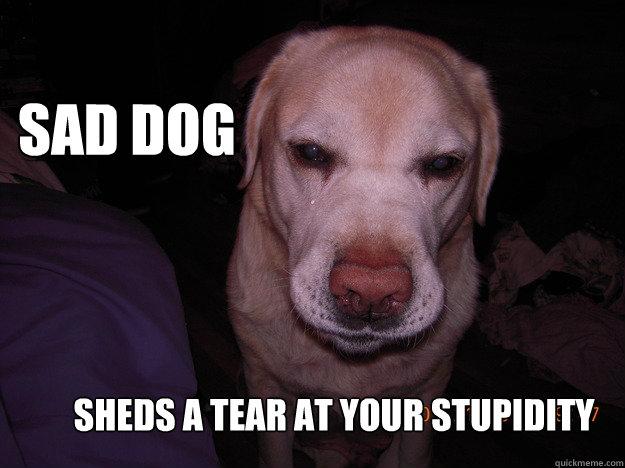 Sad Dog Sheds A Tear At Your Stupidity