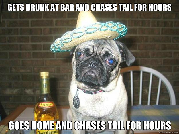 gets drunk at bar and chases tail for hours goes home and chases tail for hours