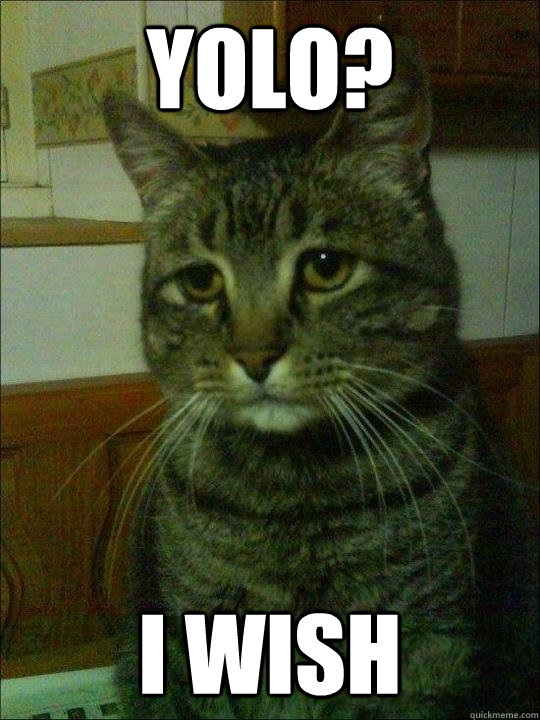 YOLO? i wish  Depressed cat