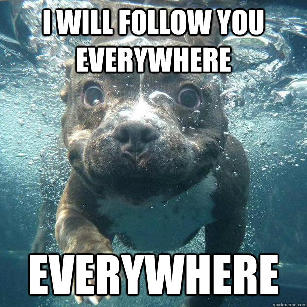 I will follow you everywhere everywhere  Overly Attached Dog