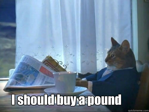 I should buy a pound - I should buy a pound  Fancy Cat