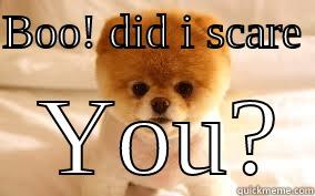 BOO! DID I SCARE    YOU? Misc