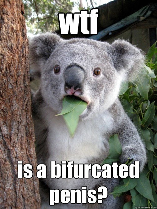 wtf  is a bifurcated penis?  Shocked Koala