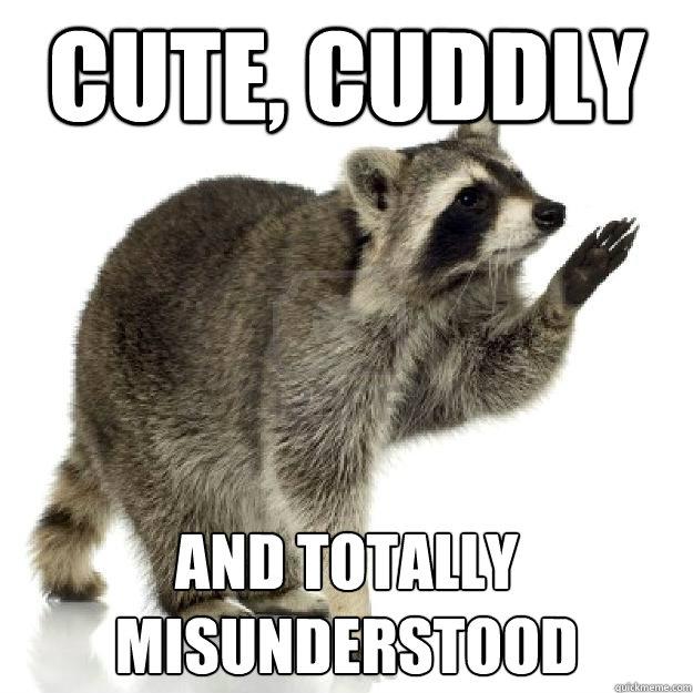 20d197c5b3a97a03790df0115c395c5dcd932cd9d28b9956f9214889bccf7e21 rascally raccoon memes quickmeme
